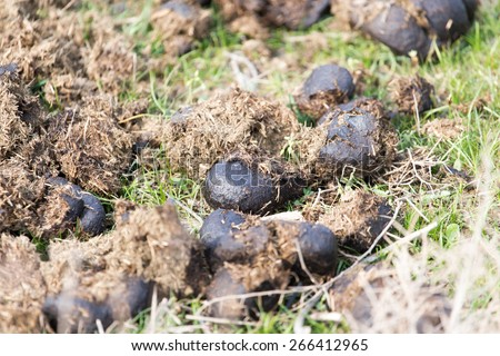 Stock Images Similar To Id 2840564 Cow Manure Heap