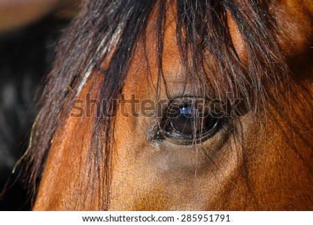 Horse portrait - stock photo