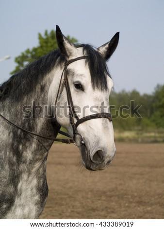 Horse portrait - stock photo