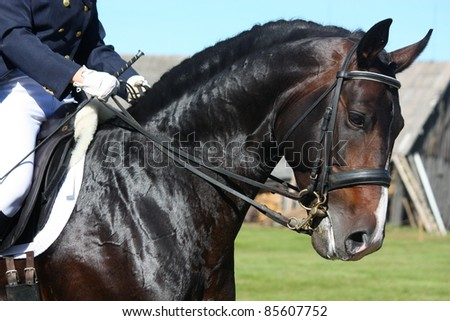 Horse portrait during equestrian show