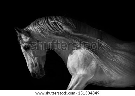 horse portrait on a dark background - stock photo