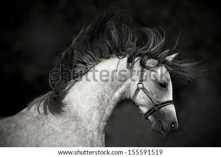horse portrait on a dark background - stock photo