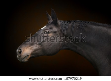Horse portrait on the background.