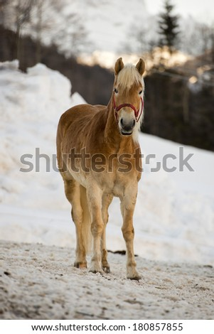 Horse portrait on the white snow background