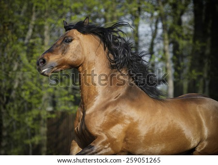 horse portrait wild runs free - stock photo