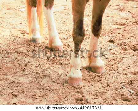 horse poses for a hoof - stock photo