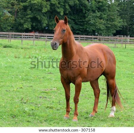 horse posing - stock photo