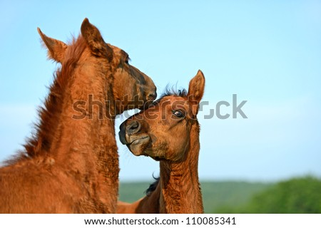 Horse protects a kid - stock photo