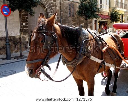 Horse pulling a carriage in Palma de Mallorca, Spain - stock photo