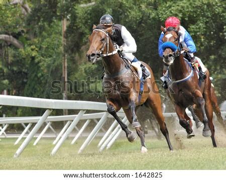 Horse Racing - stock photo