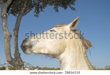 horse relaxed sleeping under a tree