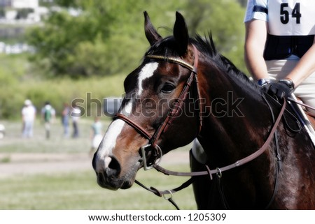 Horse & Rider Wait Before An Equestrian Competition (shallow focus).