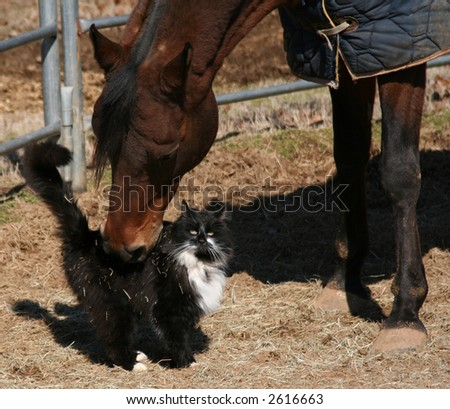 Horse rubbing back of cat - stock photo