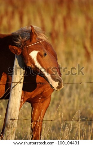 Horse rubbing neck against fence post - stock photo