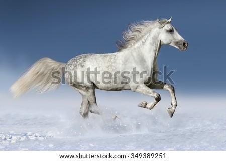 Horse run gallop in snow - stock photo