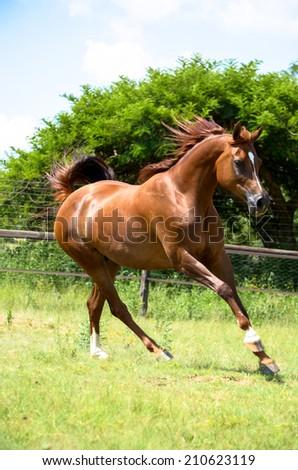 Horse running - stock photo