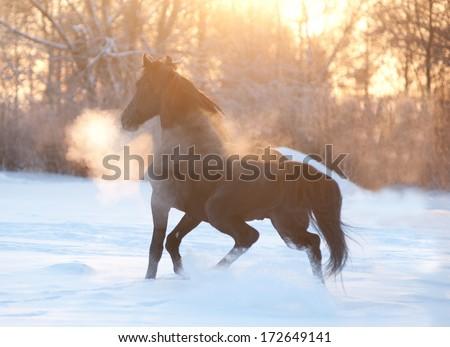 horse running at sunset - stock photo