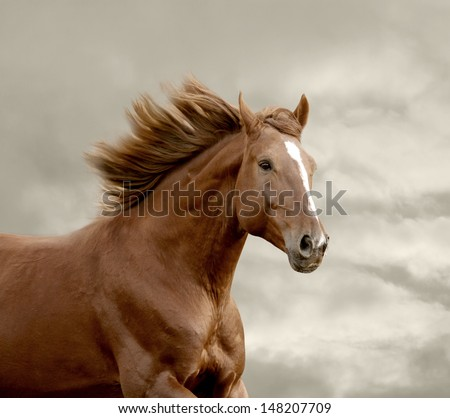 horse running closeup - stock photo