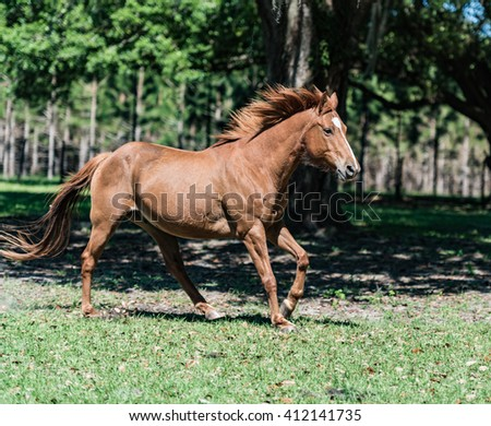 Horse running for the pasture