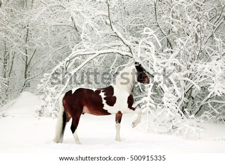 Horse running in new fallen snow