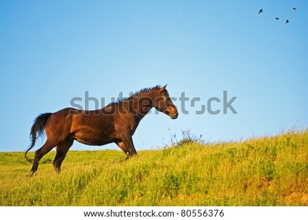 Horse Running in Pasture with Birds flying overhead