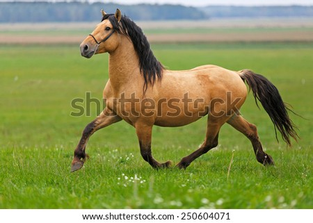 Horse running in the field. - stock photo