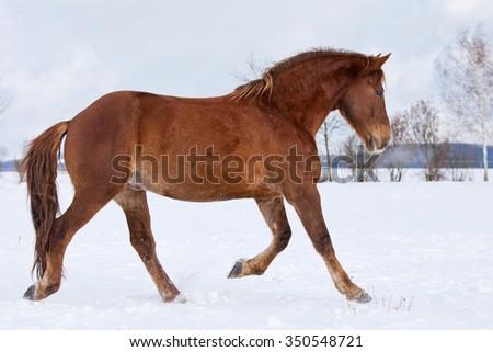 Horse running in winter landscape - stock photo