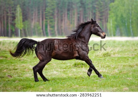 horse running on a field - stock photo