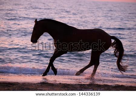 Horse running through water - stock photo