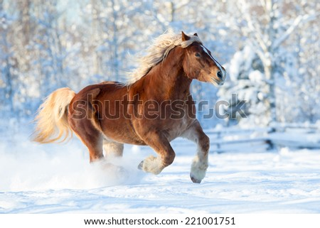 Horse runs on winter background - stock photo