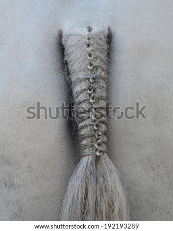 Horse's plaited tail - stock photo