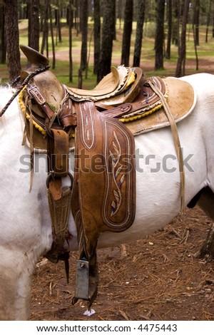 Horse Saddle on a white horse - stock photo