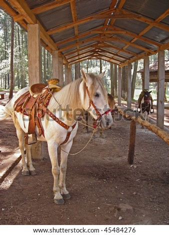 Horse saddled and ready to ride in a park in Chiapas, Mexico