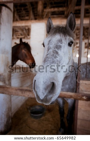 horse shot close-up in the stable - stock photo