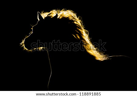 Horse silhouette isolated on black background - stock photo