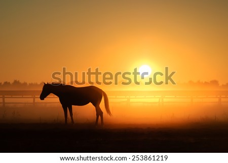 Horse silhouette on a background of dawn - stock photo