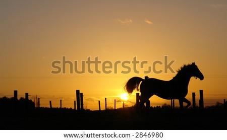 Horse silhouette sunset - stock photo