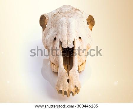 Horse skull over ocher background - stock photo
