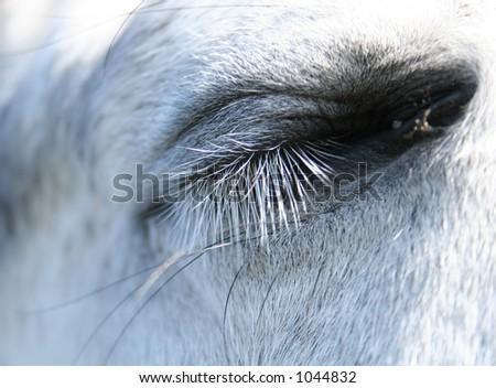 horse sleeping - stock photo
