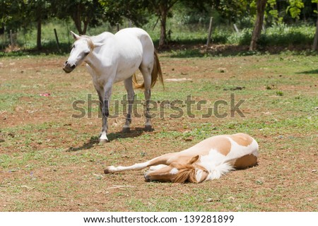 horse sleeping on the ground  in farm - stock photo