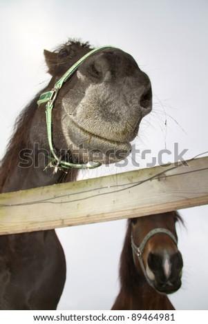 horse snout - stock photo