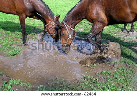 Horse Splash - stock photo