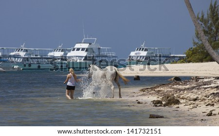 Horse Splashing in the sea - Seven Mile Beach, Grand Cayman - stock photo