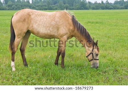 Horse standing in a field, eating grass