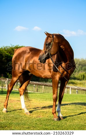 Horse standing in a green grassy paddock - stock photo