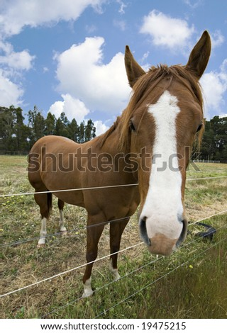 Horse standing in field looking over fence - stock photo