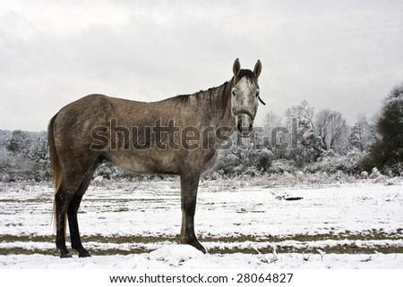 Horse standing in snowy pasture - stock photo