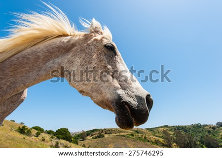 Horse standing on a hill looking to side as a profile - stock photo