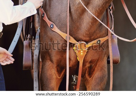 horse standing with western saddle and bridle on detail - stock photo