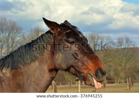 Horse sticking out her tongue
